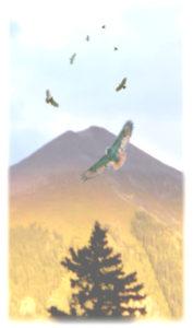 7-hawks-gold-mountain