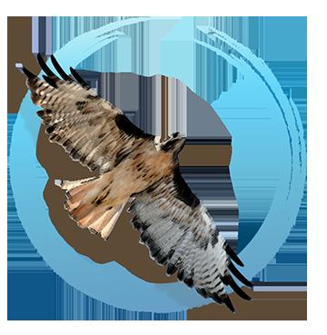 Seven Hawks Healing